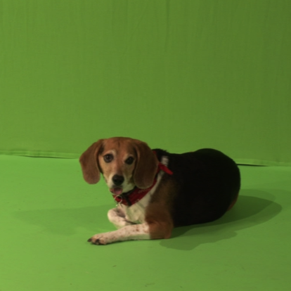 greenscreen movie with Jule